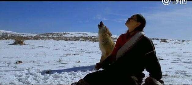 一个都市女生与一只野狼的恩情故事