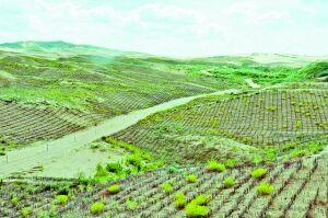 绿色的撬动——鄂尔多斯库布其沙区沙产业发展纪实