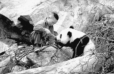 新华村 大熊猫最爱来串门(美丽中国·寻找最美乡村)