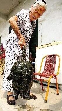 村民犁地犁出12斤重鳄鱼龟 专家:杀死吃掉(图)