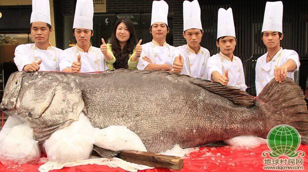 高清:广东饭店空运近700斤重巨型石斑鱼