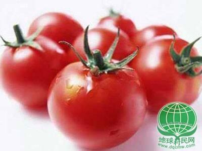 养生:防癌抗衰降压 西红柿10大养生功效