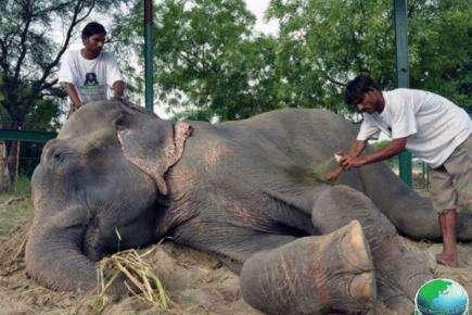大象被虐待50年获救后感动流泪