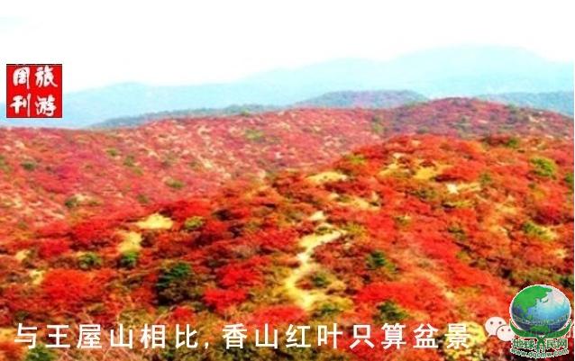 红叶.png