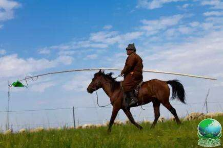 【蒙古声音】一匹从越南独自回到蒙古的马 世界上唯有蒙古马才能做到